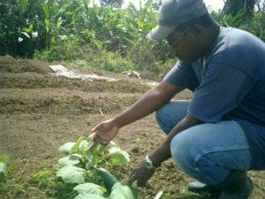 Belize garden